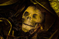 Still life skull with old leaves human on ground floor Royalty Free Stock Images
