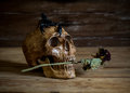 Still life skull and rose periods with a scorpion on the head Stock Images