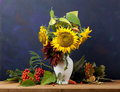 Still life with sunflower sunflowers and mountain ash on a blue background Royalty Free Stock Photo