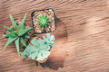 Still life of three cactus plants on vintage wood background tex texture Stock Images