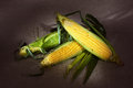Still life with three indian corn ears on gray linen canvas Royalty Free Stock Photos