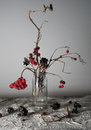 Still life. viburnum branches with berries and snow in a transparent vase