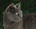 Still is undomesticated the shot of our loving cat Royalty Free Stock Photos
