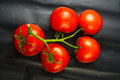 stilllife - tomatoes on twig Royalty Free Stock Photo