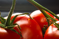 Stilllife - tomatoes on twig Royalty Free Stock Photo