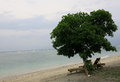 Stillness have a rest under a lonely tree with view and sound of ocean Stock Photography