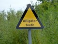 Stillstehender alligator Lizenzfreie Stockfotos