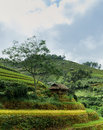 Stilt house with the rice fields in mu cang chai vietnam Stock Image