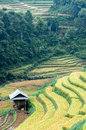 Stilt house on the rice terraced field small Stock Photos