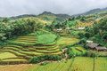 Stilt houses on the hills of rice terraced fields in mu cang chai vietnam Royalty Free Stock Photos