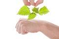 Stinging nettle arthritis medicine. Royalty Free Stock Photo