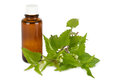 Stinging nettles with medicine bottle Royalty Free Stock Photography