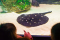Stingray in aquarium being watched by children Stock Image