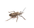 Stink bug on white background Royalty Free Stock Images