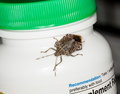 Stink or shield bug on bottle of vitamins Royalty Free Stock Image