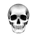 Stippled human skull with a lower jaw. Vector textured illustration