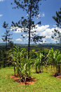 Stock image of Croydon Plantation, Jamaica Royalty Free Stock Photo