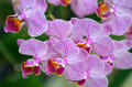Stock image of Orchid flower in closeup Royalty Free Stock Photo