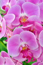 Stock image of an orchid flower in closeup Royalty Free Stock Photo