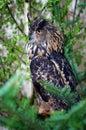 Stock owl Royalty Free Stock Photo