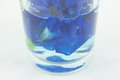 Stock photo butterfly pea flower in water in glass health Royalty Free Stock Photography