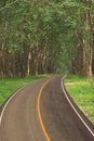 Stock photo dirt road in deciduous forest rubber tree plantation east of thailand Royalty Free Stock Image