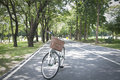 Stock photo old bicycle in fresh summer park green Royalty Free Stock Photos