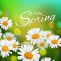 Stock vector illustration Hello, Hi Spring. Realistic chamomiles, blurred defocused background. Macro flowers. Green bokeh. Royalty Free Stock Photo