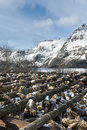 Stockfish (cod) in winter time on Lofoten Islands Royalty Free Stock Photo