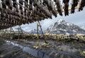 Stockfish on Lofoten Islands Royalty Free Stock Photo