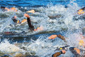 Stockholm aug the chaotic start in the mens swimming in t cold water at itu world triathlon series event Stock Image
