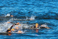 Stockholm aug the chaotic start in the mens swimming with tamas toth hun focus at itu world triathlon series event Royalty Free Stock Image