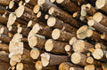 Stockpile of fir round timbers Royalty Free Stock Photography