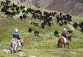 Stockriders with flock in Alay mountains on pastureland Royalty Free Stock Photo
