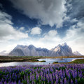 Stokksnes Royalty Free Stock Photo