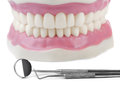 Stomatology anatomical teeth model and dental tools Stock Photo
