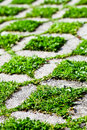Stone block walk path with green grass in the park background Royalty Free Stock Image