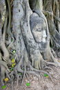 Stone budda head in the tree roots in Ayutthaya