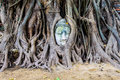 Stone buddha head in the tree roots ayutthaya is old capital of status at thailand Royalty Free Stock Images