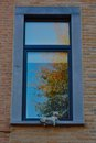 Stone cat on a window artestic watching tree Royalty Free Stock Image