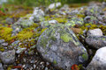 Stone with colorful moss Stock Photos
