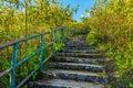 Stone concrete stairway in Tithonia diversifolia field Royalty Free Stock Photo