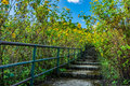 Stone concrete stairway in Tithonia diversifolia field Royalty Free Stock Photo