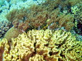 Stone coral the surprising underwater world of philippine sea island mindoro Stock Photography