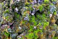 Stone covered with green moss. Texture. Nature. An unusual stone. Royalty Free Stock Photo