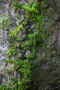 Stone covered with moss and green plants