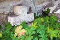 Stone cross behind geranium old Royalty Free Stock Photos