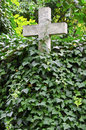 Stone cross covered by ivy at old cemetary Royalty Free Stock Photography