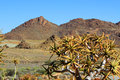 Stone desert landscape of in geobab national park Royalty Free Stock Photos