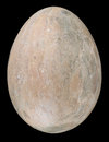 Stone Egg Royalty Free Stock Images